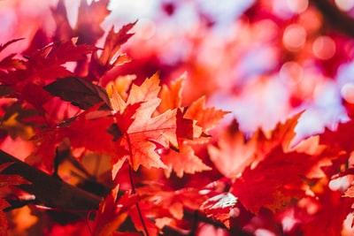 比叡山 紅葉